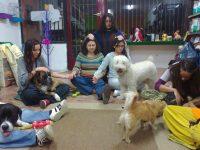 Los perros encantados en Zona Animal